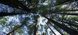 La gestion durable des forêts, une priorité